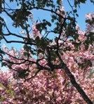 spring_12_01_LR