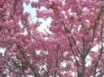 Flowering_trees_1_LR